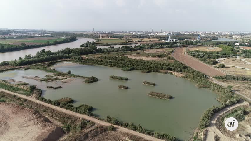 Cuatro especies en vías de extinción anidan en el Puerto de Sevilla