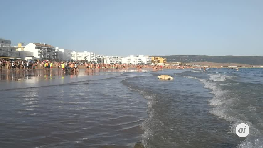 Una tortuga laúd aparece en la playa del Carmen de Barbate