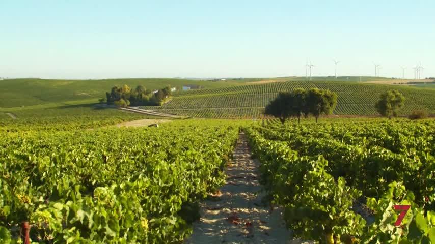 La Ruta del Vino y Brandy de Jerez editará una guía enogastronómica