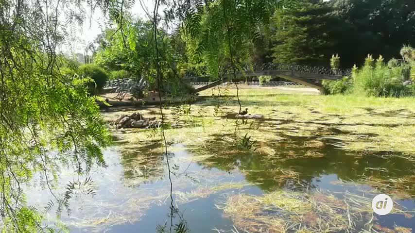"""Las """"algas invasoras"""" también llegan al Parque de los Principes"""