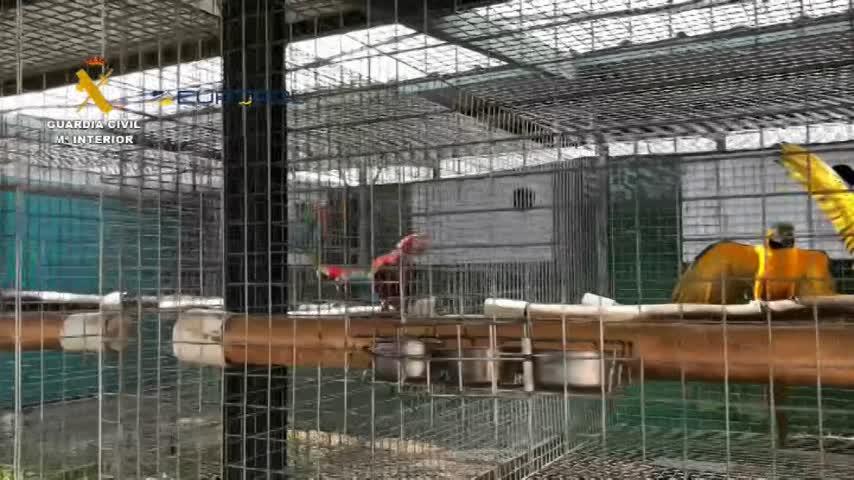 23 detenidos por tráfico de especies protegidas e incautadas 280 aves