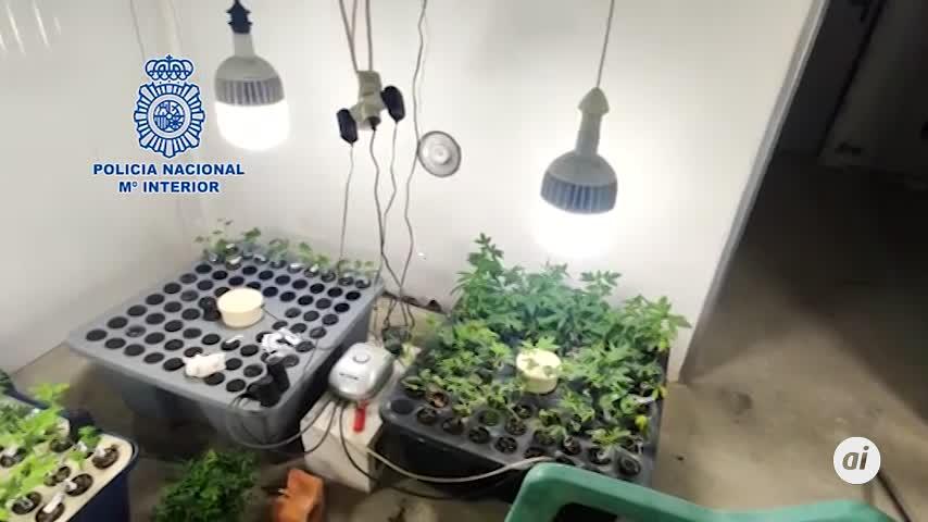 Siete detenidos y 650 kilos de marihuana intervenidos en La Línea