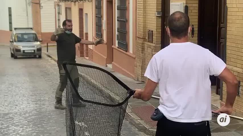 Capturan un ejemplar de lince ibérico en una vivienda de Rociana