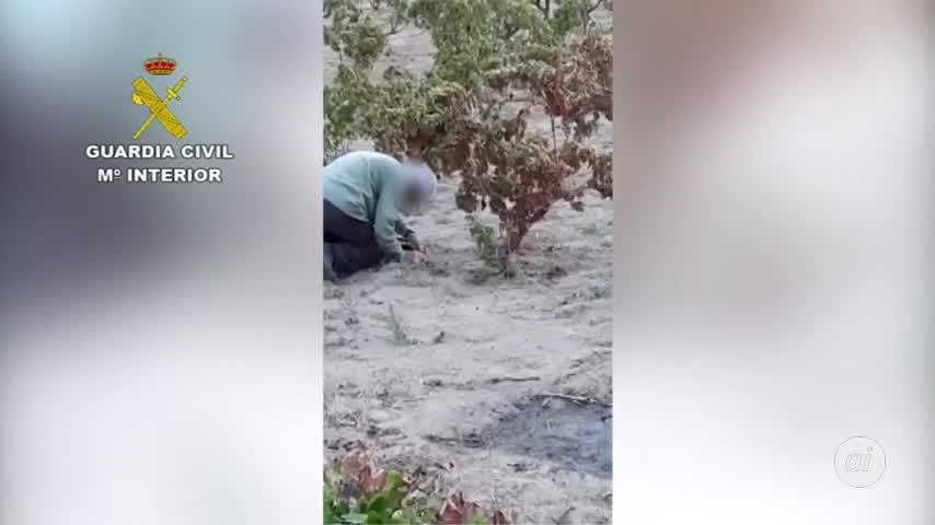Pillan a un cazador furtivo con cepos para capturar animales en Bollullos