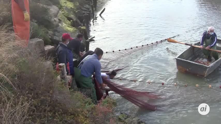 El despesque de Manguita abre la VIII Semana de los Esteros de Chiclana