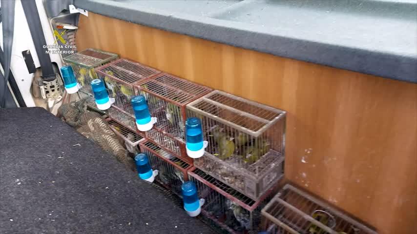 Liberan a 300 aves protegidas en Málaga que iban a ser vendidas por internet