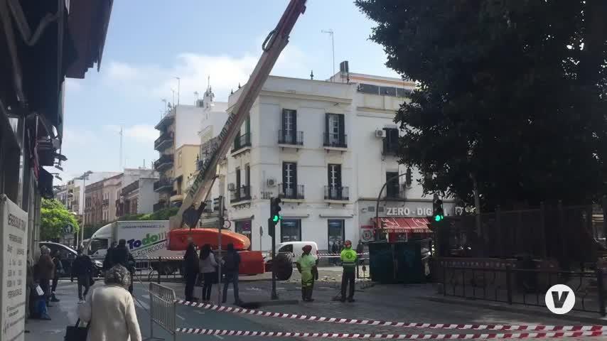 Parques y Jardines de Sevilla poda de emergencia el ficus de San Jacinto