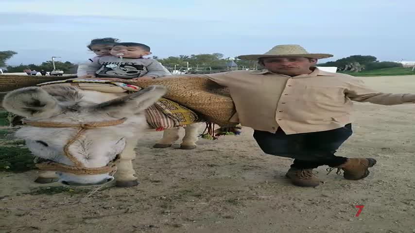 Un curso para obtener el 'Carné de burro'