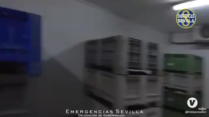 Intervenidos más de 200 kilos de caracoles en mal estado en Sevilla