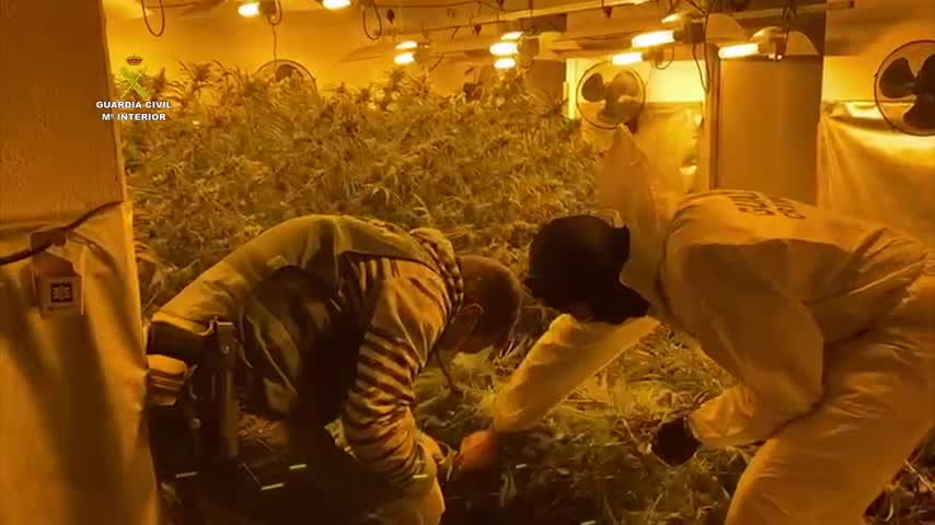 Incautan más de 2.000 plantas de marihuana en dos plantaciones en Málaga