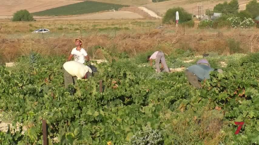 Acuerdo vital para revisar los pliegos de condiciones de las D.0. de Jerez y Sanlúcar