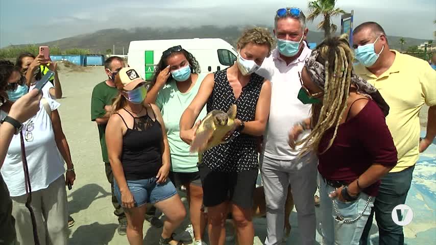 Liberada en La Línea una tortuga boba tras cuatro meses de cuidados