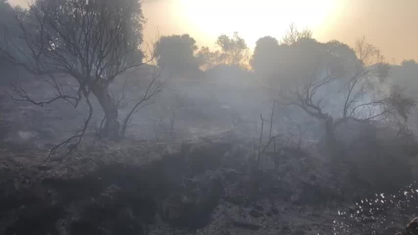 Incendio forestal en Alhaurín de la Torre