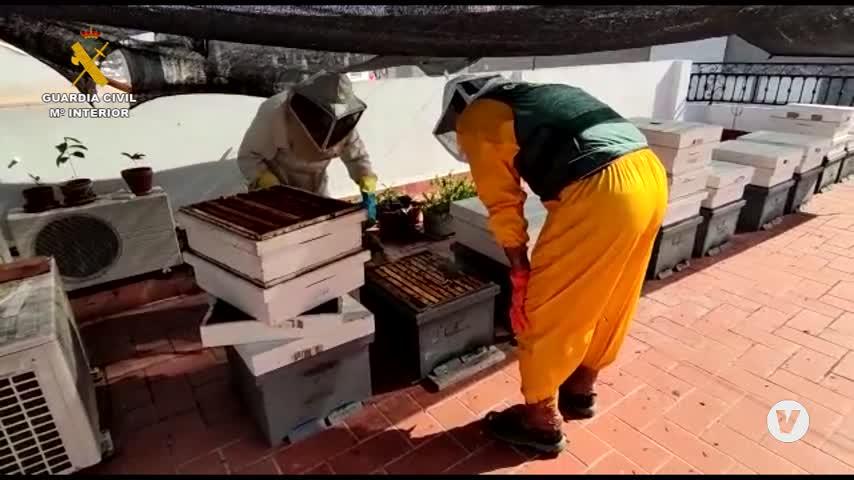 La Guardia Civil descubre una explotación apícola ilegal en una azotea de Camas (Sevilla)