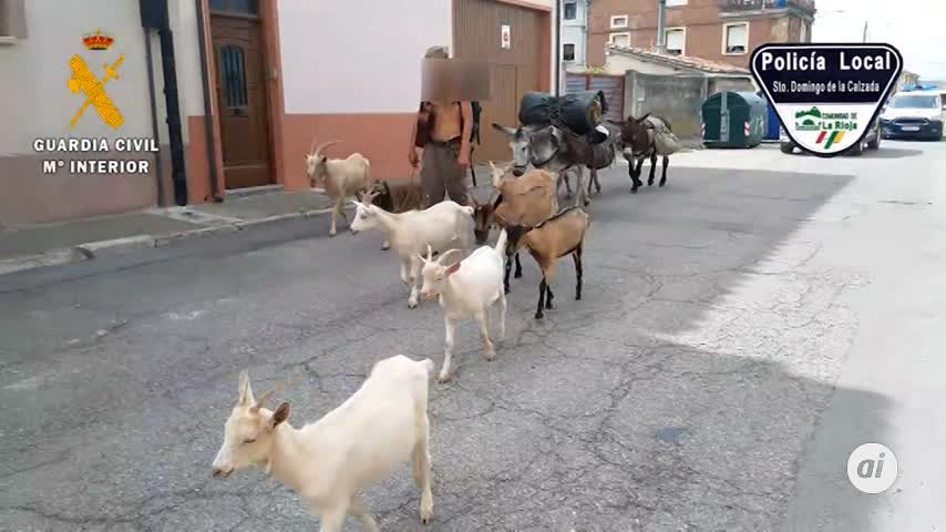 Identifican un peregrino que realizaba el Camino de Santiago con once animales sin papeles
