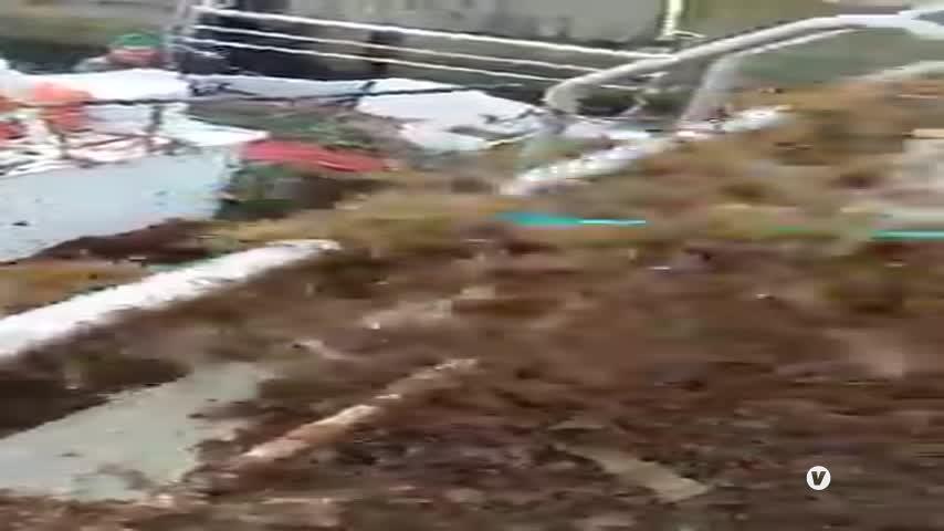 Alertan de una expansión mayor del alga invasora que afecta a los pescadores de Tarifa