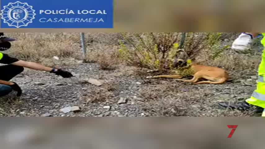 La Policía de Casabermeja salva a un perro de morir atropellado en una autovía