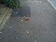 Dog fouling fault reported - Queens Road, Slough SL1 3QW, UK