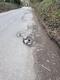 Pothole fault reported - Berry Ln, Chorleywood, Rickmansworth, Hertfordshire WD3, UK