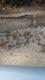 Pothole fault reported - Dobwalls, Liskeard, Cornwall PL14, UK