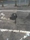 Car parking fault reported - Duke St, Macclesfield, Cheshire East SK11 6UR, UK