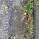 Blocked drain fault reported - Maude Ln, Ripponden, Sowerby Bridge HX6 4BE, UK