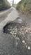 Pothole fault reported - Horsemoor Ln, Penn, Amersham HP7 0PL, UK