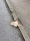Pavement/Footpath fault reported - 124 Holymoor Rd, Holymoorside, Chesterfield S42 7DU, UK