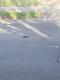 Pothole fault reported - 14 Ladies' Mile Rd, Brighton BN1 8QF, UK