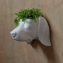 CERAMIC GARDEN WALL PLANTER - DOG HEAD