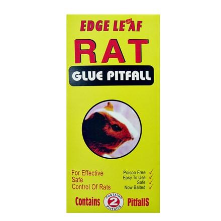 RAT GLUE TRAP PITFALL