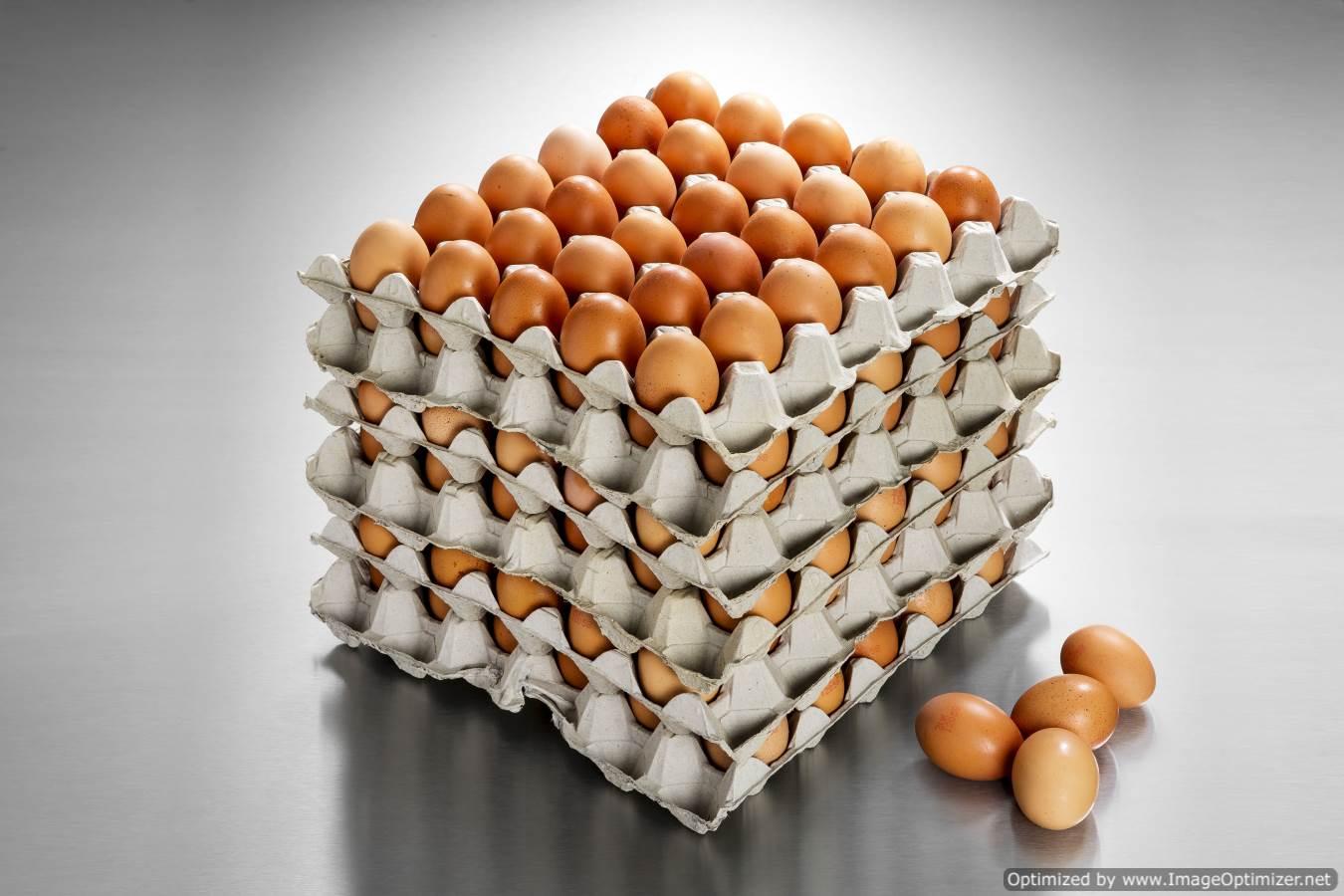 Large Eggs (360 eggs per box/30 dozen)