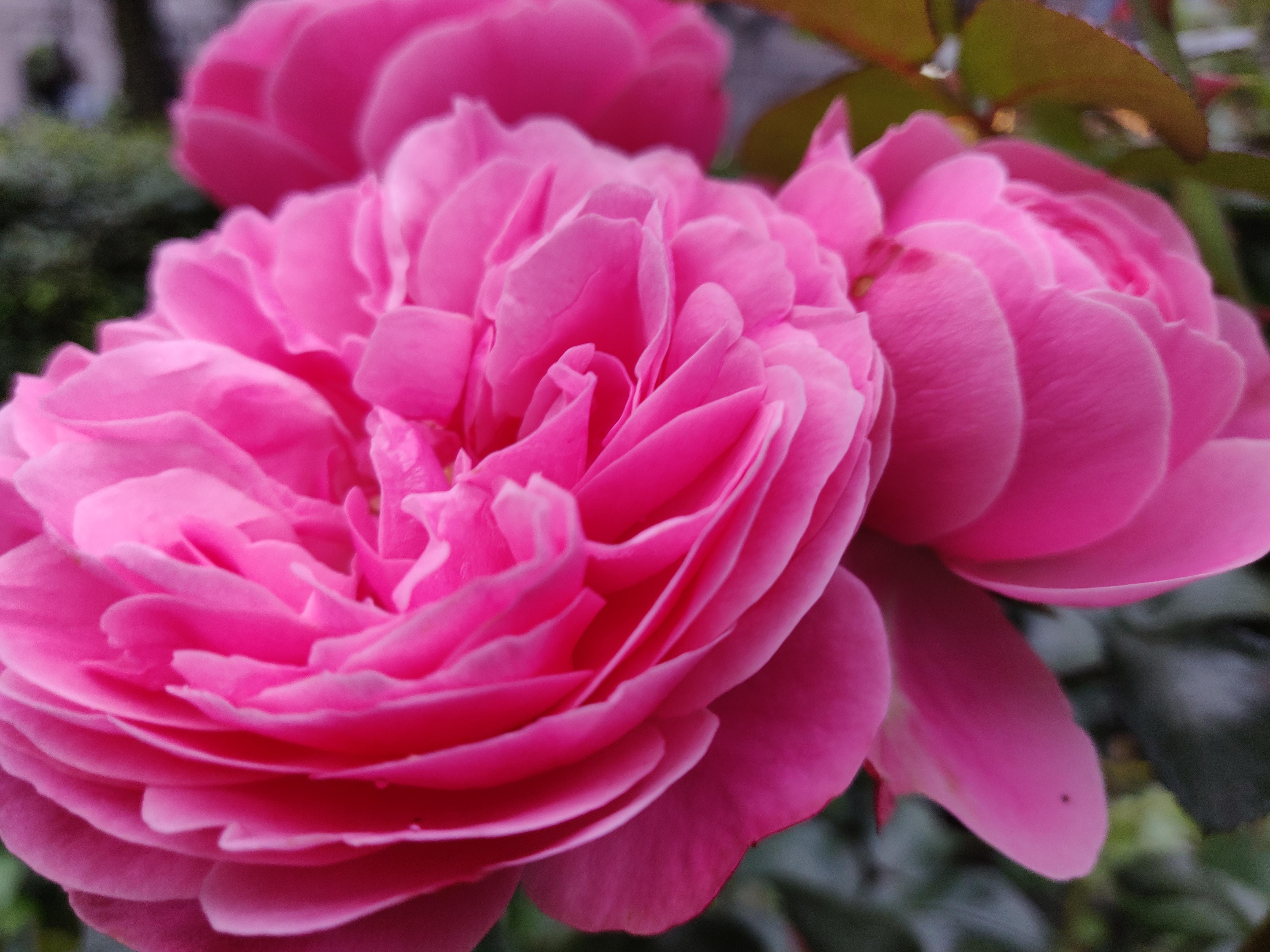 Syöpäsäätiö palkitsee Roosa nauha -päivänä vuoden syöpälääkärin ja -hoitajan