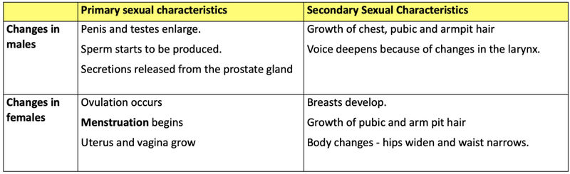 Example of secondary sex characteristic