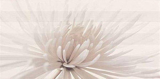 Avangarde White Inserto Flower 29,7x60