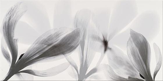 Colorado Nights Inserto Flower 29x59,3