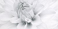 Grissa White Inserto Gerbera 29,7x60