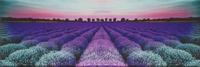Centro Lavender Field Glass 25x75
