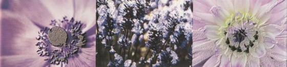 Maxima Violet Listwa 2 10x44,8