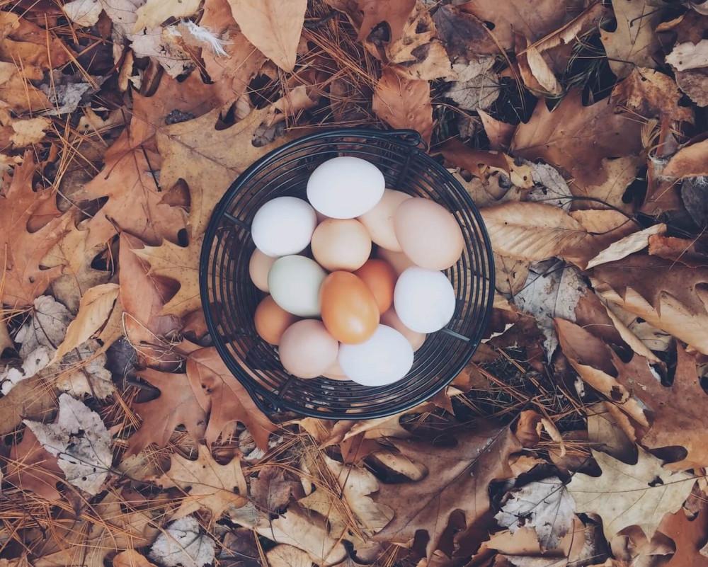 Grundlagentraining Ernährung - Teil 5: Eiweiß - und die vielen, kleinen Besonderheiten