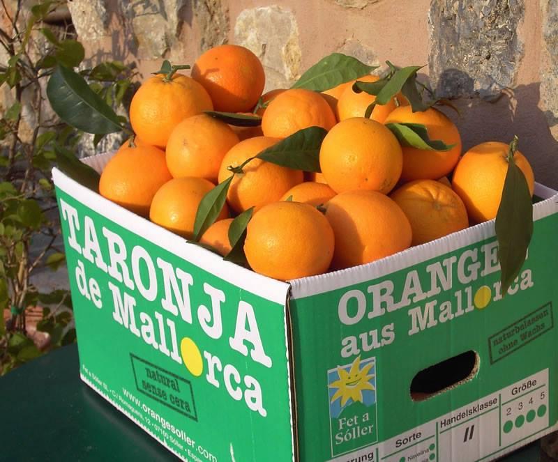 Mallorca für zu Hause: Mandeln, Orangen und vieles mehr von Fet a Sóller