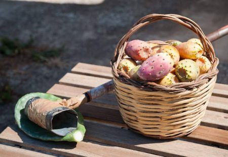 Séjour Oenogastronomique en Sicile - Recolte de Figues de Barbarie