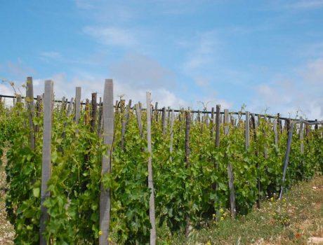 La Sicile Baroque - Vignobles de la Vallée de Noto