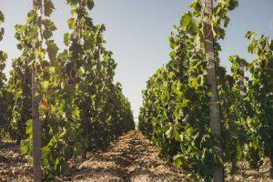 La Sicile Baroque - Vignobles