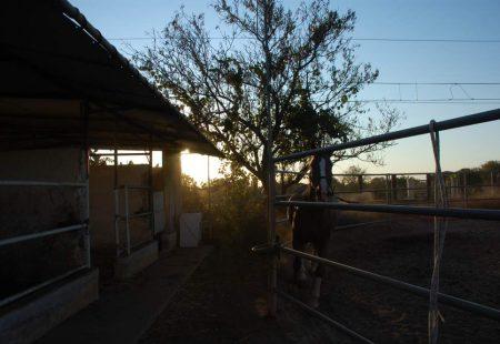 La-Sicile-à-cheval