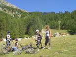 Cyclotourisme dans les Alpes de Haute-Provence - réf : 147