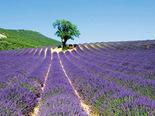 Voyage au pays de la Drôme Provençale - réf : 018