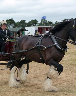 Weeting Horse