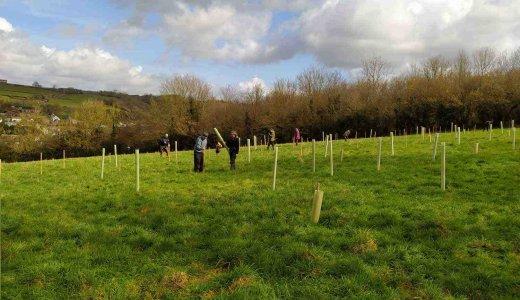 Croscombe Tree Planting
