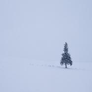 Snow 20day